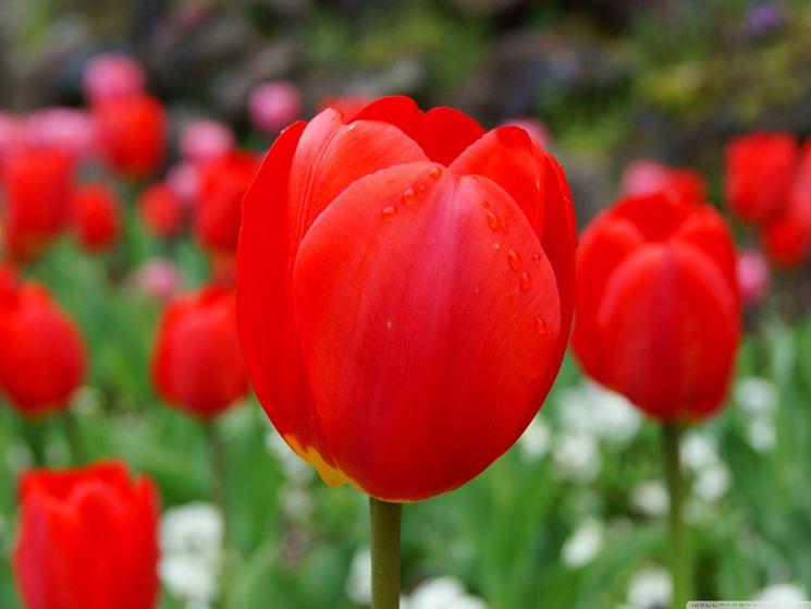 """Un fiore per dire """"ti amo"""""""